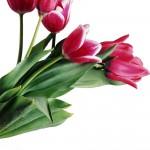 15-imagenes-flores-rosas-san-valentin-amor-09